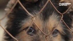 Киевский приют для животных просит о помощи пищевыми отходами