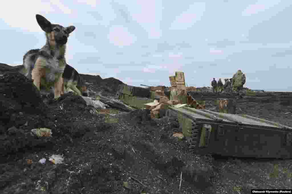 Собаки возле ящиков со снарядами на позициях ВСУ в Донецкой области, февраль 2015 года