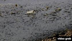 Грязь и мусор в Балтийском море у берегов Калининградской области