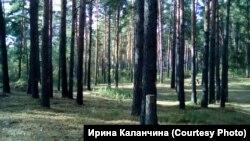 Уникальный ленточный бор в нагорной части Барнаула