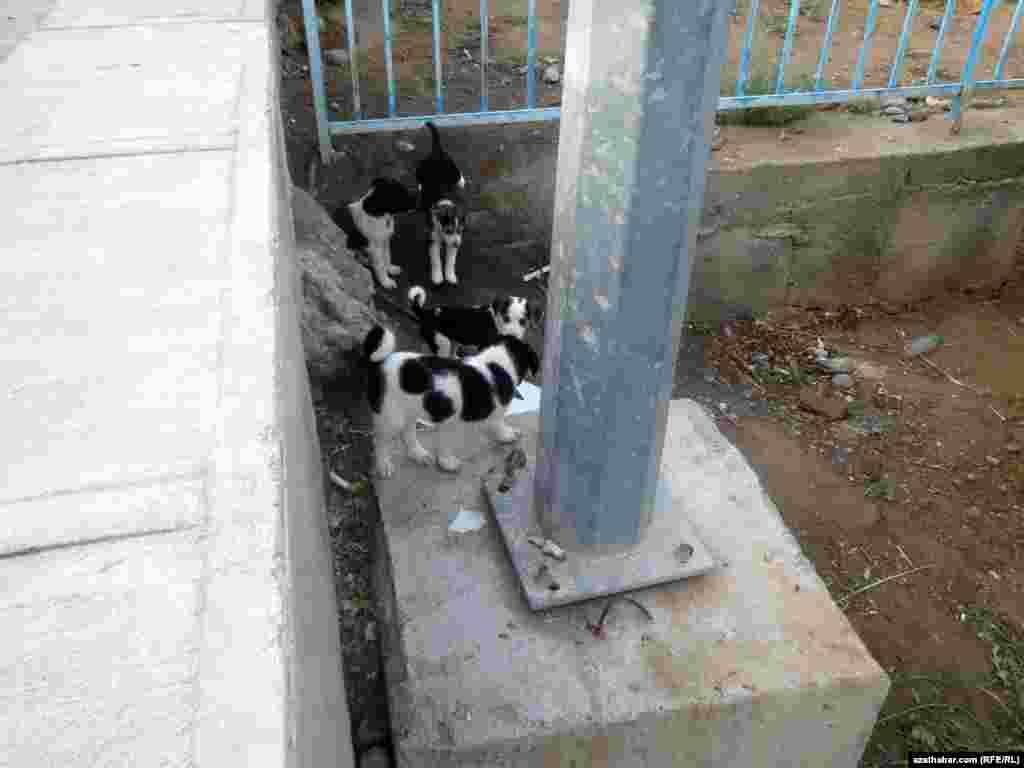 Бродячие щенки в Ашхабаде