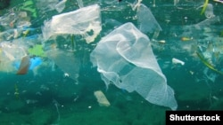 Five trillion pieces of plastic currently litter the ocean.