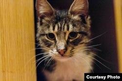 Кіт Правосек (фото надане волонтерами)