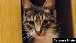 Macja me emrin Pravosek
