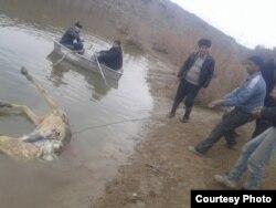 Туши несколько ослов обнаружили в водоеме в Самаркандском районе.
