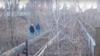Владивосток: власти перекрыли мост, жители ходят через реку по трубе