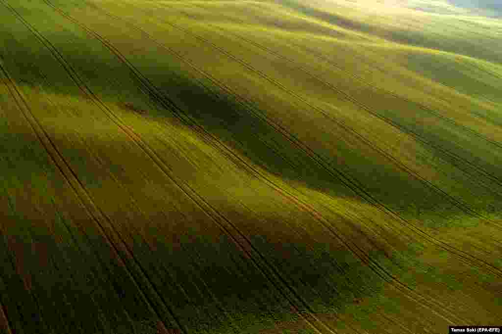 An aerial photo taken with a drone shows winter wheat fields near Abaliget, Hungary. (epa-EFE/Tamas Soki)