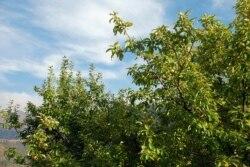Жеңілген «Зеленое спасение» берілмеуге бекінген