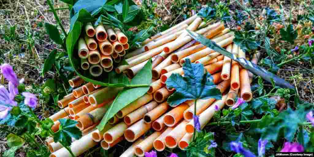 ...и превратить их в биоразлагаемую альтернативу пластиковым соломинкам.