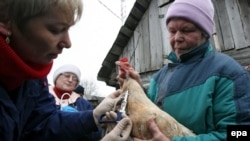 Пока официально диагноз «грипп птиц тип Н5N1» подтвердили лабораторно в Москве и в пяти районах области - Домодедовском, Одинцовском, Подольском, Наро-Фоминском и Талдомском