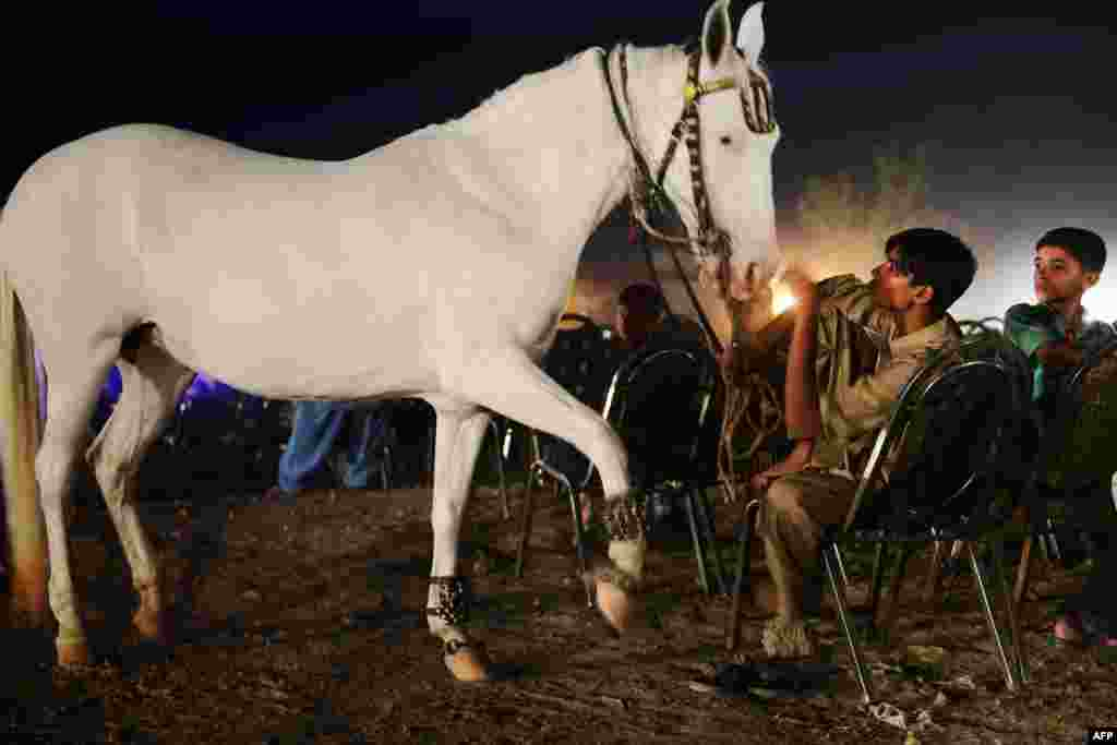Sajjet, a hired hand, interacts with a trained horse that goes by the name of Ladone as he and others take a break from performing during a political rally in Lahore, Pakistan. (AFP/Roberto Schmidt)