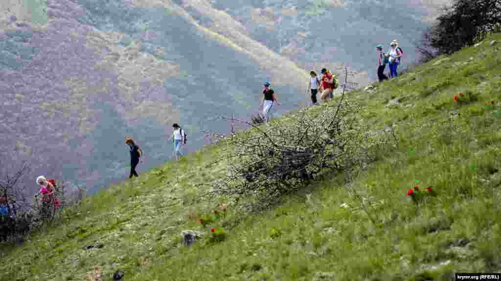 Дикі півонії на самому спуску з «тюльпанової вершини»