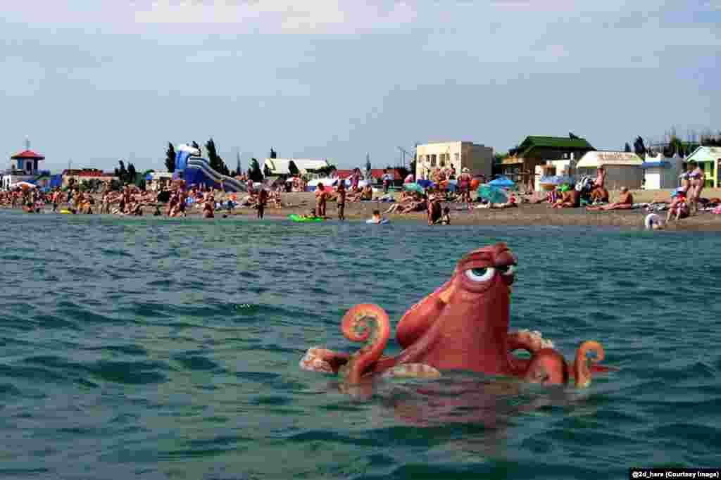 Hank, the octopus from Finding Dory, lurks off a Russian beach.