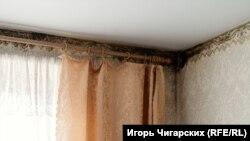 """Черная плесень в """"путинке"""", новом доме Фроловых."""
