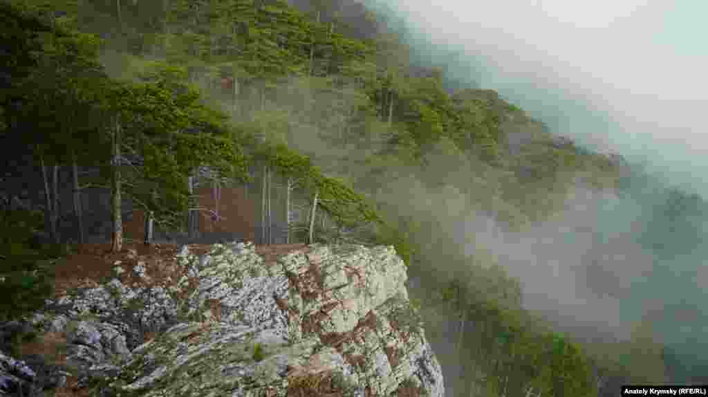 Головне надбання заповідника – сосна кримська, або сосна Палласа