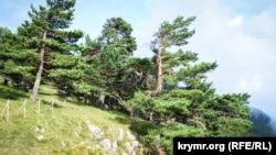 Кримський природний заповідник