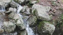 Горная сыбірская ручаіна