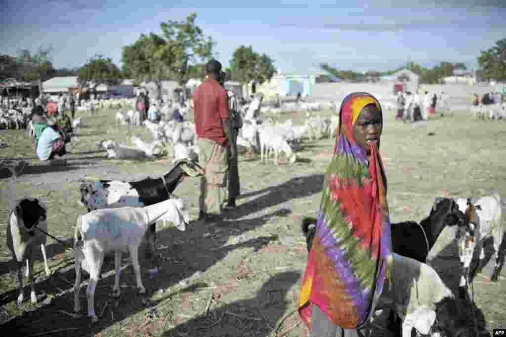 У Сомалі популярні ринки тварин, на яких продають кіз і верблюдів.  На фото – знаменитий «Бакара» в Могадішо, столиці Сомалі. На ньому неодноразово проходили бої між злочинними угрупованнями країни, також тут «працюють» фальшивомонетники і торговці нелегальною зброєю