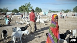 Humanitarna pomoć potrebna za 6,2 miliona ljudi