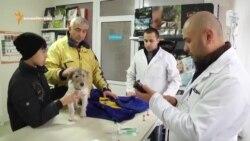 Ветеринария в городе и на селе