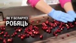 Як у Глыбокім вырабляюць журавіны ў цукровай пудры