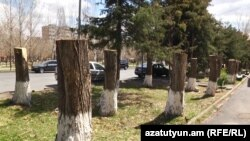 Armenia -- Hewed trees in Davtashen district, Yerevan. 10April, 2017