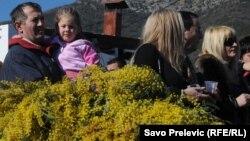 """В Абхазии многие зарабатывают на мимозе. """"Пушистое золото"""" всегда считалась символом наступившей весны."""
