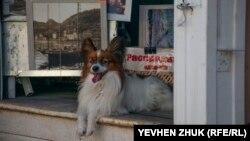 Курортна Балаклава в серпні: відсутність парковок, натовпи відпочивальників і «розпродаж» собак (фотогалерея)