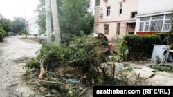 Agaçlaryň çapylmagy, Aşgabat