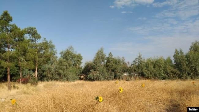 Iran -- Khavaran Cemetery