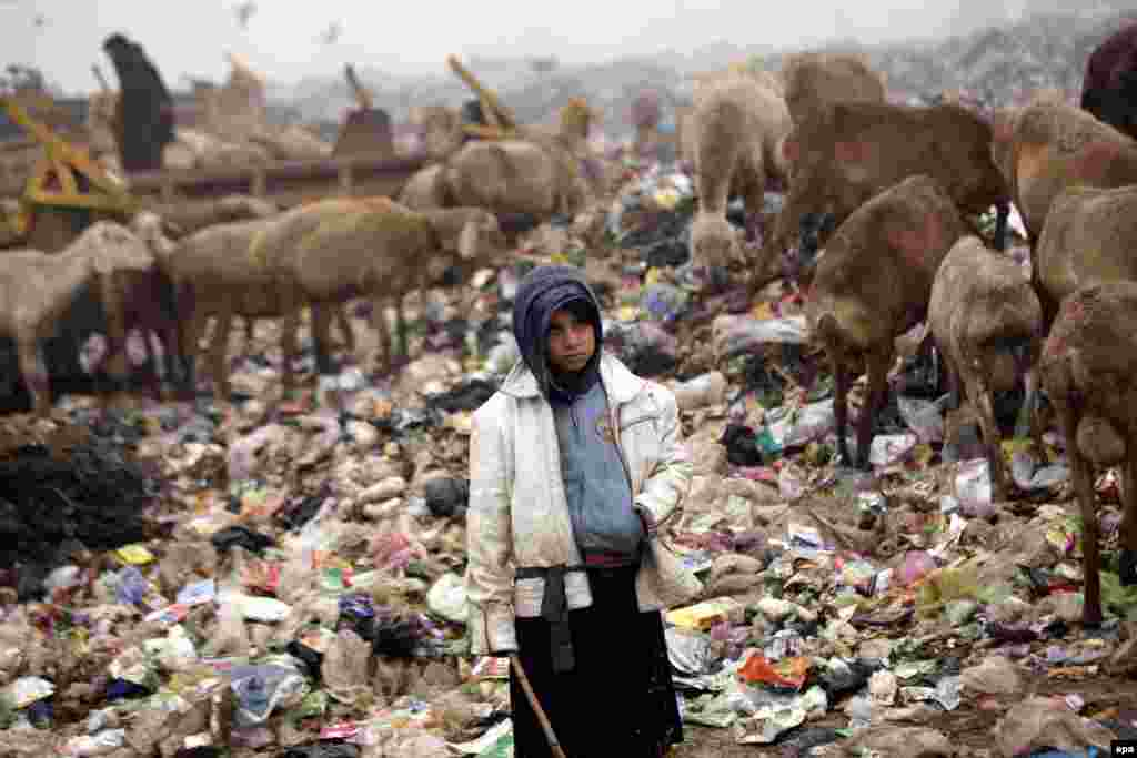 A shepherd poses for a photograph in a landfill on a roadside in Peshawar, Pakistan. (epa/Arshad Arbab)