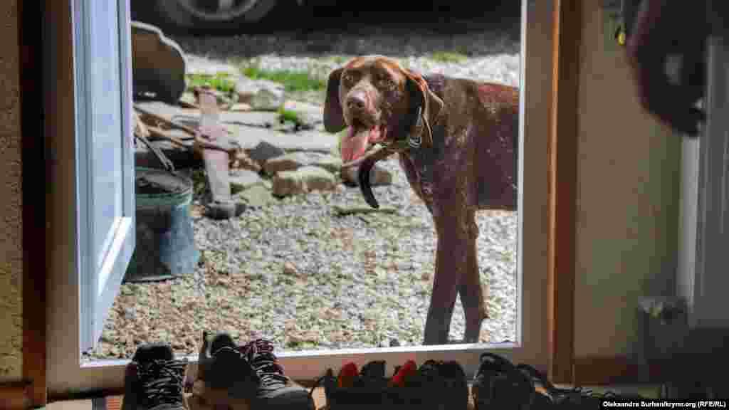 Ev kirişinde ziyaretçilerni Arbek lağaplı köpek qarşılay. Musafirlerge alışqan