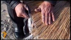 Шыпыргынын шыбагасы