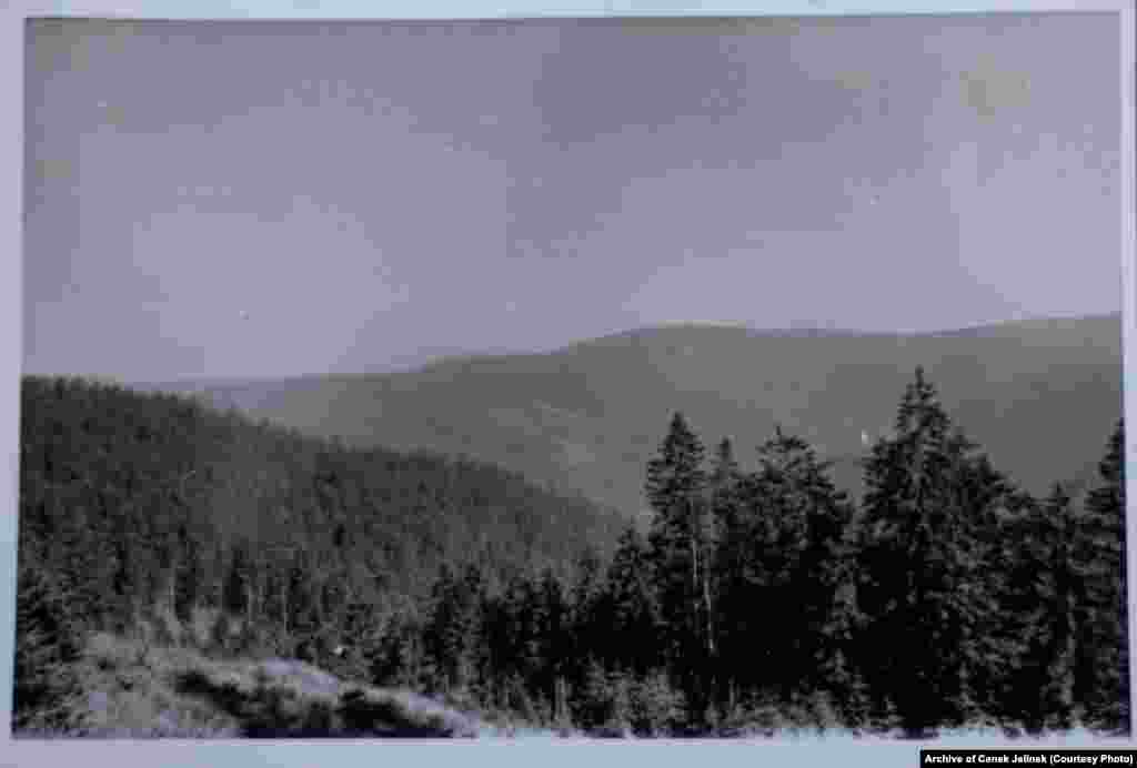 The surrounding forests near Sindelova in 1978-79