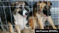 Собак казанской пенсионерки поймали, а потом выпустили за много километров от дома.