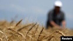 Выделенные Евросоюзом 60 миллионов евро пойдут на модернизацию сельского хозяйства