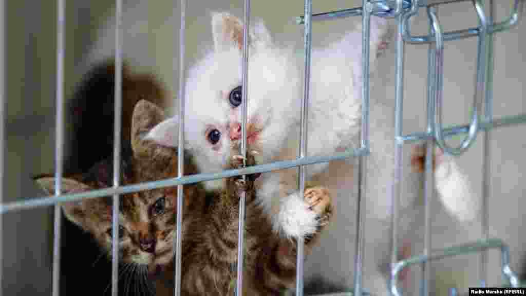 В приют часто подкидывают маленьких котят, выхаживать приходится всех.