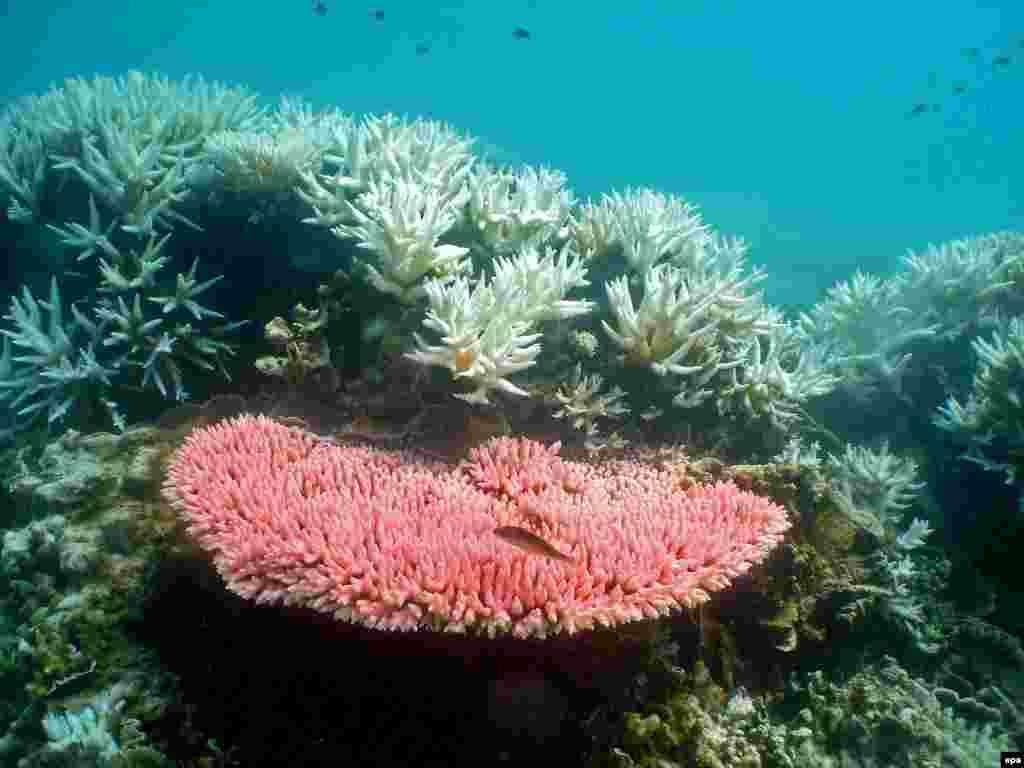 Большой Барьерный Риф в Австралии с 70-х потерял примерно половину кораллов и может измениться до неузнаваемости к 2050 году, говорит профессор морской биологии Питер Сейл (Peter F. Sale). Уникальной экосистеме рифа угрожает потепление климата и загрязнение воды