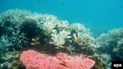 Korali na Velikom koralnom grebenu, ilustrativna fotografija