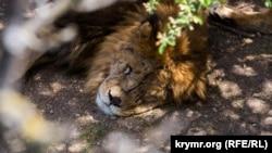 Царство зверей. Прогулка в крымском парке сафари (фотогалерея)
