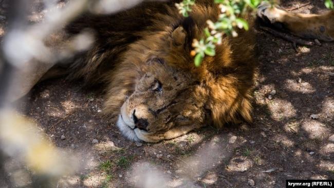 Photo Gallery: Царство зверей. Прогулка в крымском парке сафари (фотогалерея)