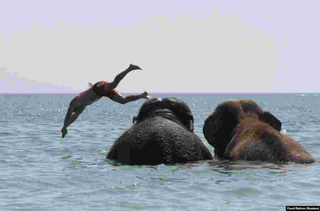 A trainer dives as elephants from a local circus take a regular bath in the waters of the Black Sea on a hot summer day in Yevpatoria on the Russian-occupied Ukrainian peninsula of Crimea. (Reuters/Pavel Rebrov)