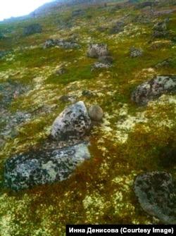 Камни арктической тундры