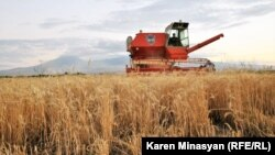 Armenia -- Wheat harvest in the Ararat province, 18Jul2012