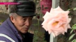 Киргизские розы - урок восточной романтики
