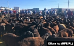 Часть рынка, где продают овец