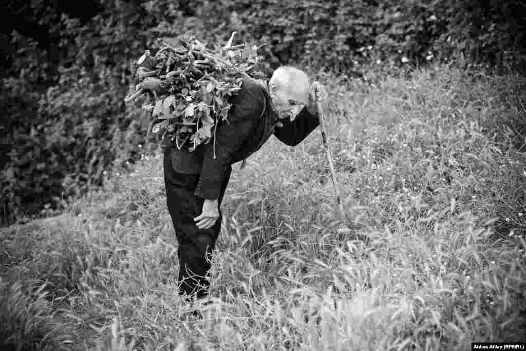 Masallının dağ kəndlərinin birində qoca kişi meşədən topldaığı quru odunları evinə daşıyır.