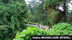Батумский ботанический сад (архивное фото)