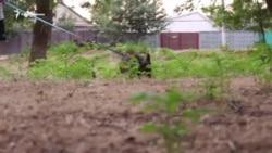 Четырехлапый военнопленный: судьба собаки арестованного украинского моряка (видео)