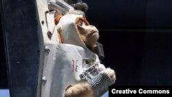 Ілюстраційне фото: обладнання, в якому запускали мавп у космос США 1959 року